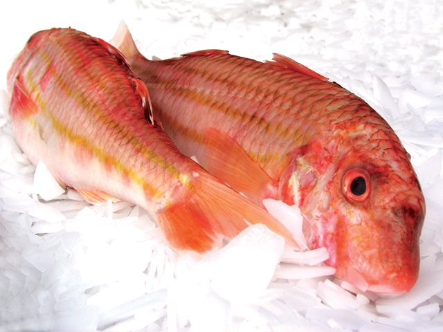 whole red mullet direct seafood o 39 connor perth wa