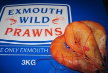 Cooked Exmouth Prawns