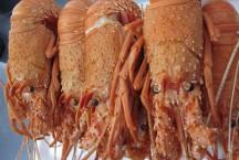 Fresh Cooked Rottnest Crayfish