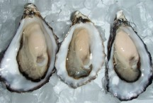 Oysters- New Zealand