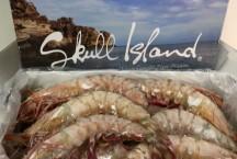 Skull Island Jumbo Tiger Prawns