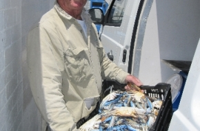 Aiden Delivering Fresh Blue Manna Crabs