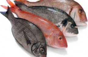 assorted-whole-fish