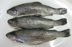whole-rainbow-trout